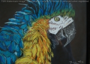 tableau animaux ara perroquet bleu : ara bleu