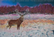 tableau animaux cerf crepuscule bois : cerf au crépuscule