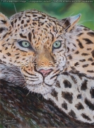 tableau animaux panthere repos arbre jungle : Panthère au repos