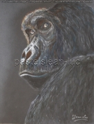 tableau animaux gorille retourner dos face : Gorille se retournant