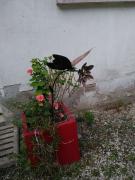 sculpture fleurs fer fleur jardin : le papillon