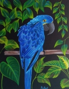 tableau animaux ara perroquet : ARA HYACINTHE
