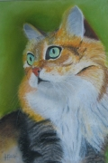 tableau animaux chat animaux : chat roux