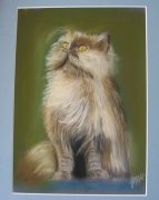 tableau animaux portrait chat animaux : chat angora