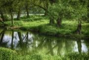 photo paysages arbre lac reflet vert : Reflets