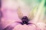 photo fleurs fleur illusion elfe jardin enchante : L'elfe du jardin enchanté