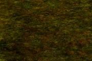 art numerique autres nature : Herbes et mousses (E2h)