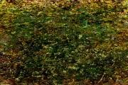art numerique autres nature : Herbes et mousses (E1h)