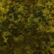 art numerique autres nature : Mousses (E1c)