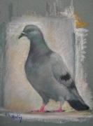 tableau animaux pigeon oiseau : copain pigeon