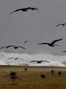 photo mer nature oiseaux : paires et mer