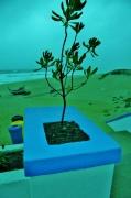 photo mer recyclage nature portugal : no plastic