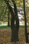 photo paysages femme foret paysage automne : Femme dans l'arbre