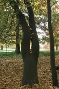 Femme dans l'arbre