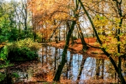 photo paysages foret eau reflet automne : Dansla forêt de Serna