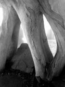 photo paysages terra botanica arbre decor sensation : Terra Botanica 2