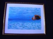 tableau marine eaux tropicales : Eaux tropicales