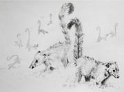 dessin animaux animaux sauvage mignon coatis : Coatis dans la Brume