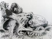 dessin animaux pieuvre ocean aquatique mer : Mama Octopus