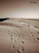 photo paysages dune pyla ocean : Traces