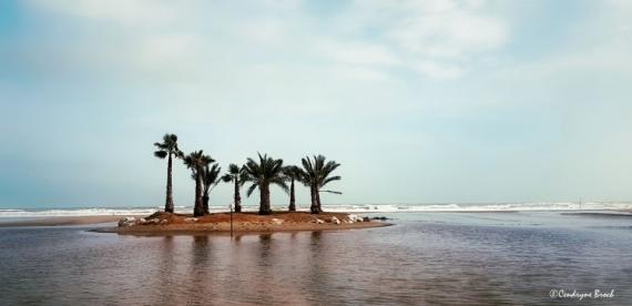 PHOTO Mer Ile Palmiers Port la Nouvelle Paysages  - Et au loin, une île.