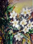 tableau fleurs frangipanier fleurs aquarelle tropical : Fleurs de frangipanier