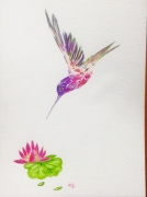 tableau animaux oiseau fleur nenuphar violet : Colibri et nénuphar