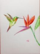 tableau animaux oiseau fleur nature multicolore : Colibri et l'oiseau de paradis