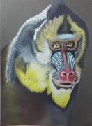 tableau animaux singe prestance amazonie couleurs : Le Mandrile