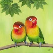 tableau animaux : oiseaux Inséparables