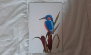 tableau animaux martinpecheur oiseau roseau : Martin-pêcheur sur un roseau