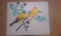 couple de goldfinch