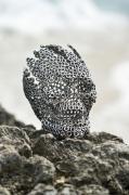 sculpture personnages tete de mort skull inox stainless steel : Big skull burst