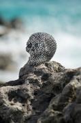 sculpture personnages skull tete de mort inox stainless steel : Little skull