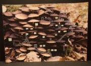 mixte autres champignons automne foret : Habitat forestier