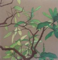 PLANTE JAPONAISE
