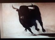 tableau animaux taureau arene sauvage : taureau