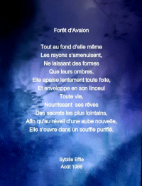 Forêt d'Avalon
