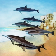 art numerique animaux dauphin essaouira : Cop22 les dauphins