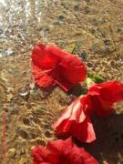 art numerique hibiscus fleurs : Hibiscus