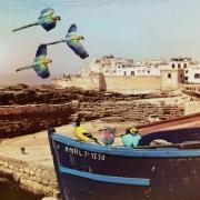 art numerique villes essaouira perroquets port : Les perroquets arrivent...