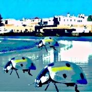 digital art villes essaouira coccinelles cop22 : Cop22 les coccinelles