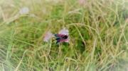 photo animaux butterfly papillon nature : papillon