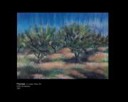 tableau paysages verger prunes sud france : paysage St cirice