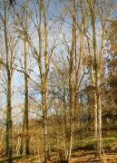 photo paysages : arbres retournés