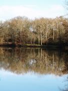 photo paysages : arbres de décembre se reflètant