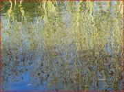 photo paysages arbres eau : reflets d'arbres