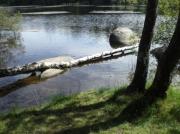 photo paysages eau arbres roc : lac, tronc, roc