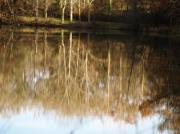 photo paysages : reflets de lisière