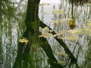 photo paysages : reflets dans une mare